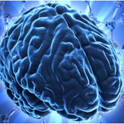 Hướng dẫn cách sử dụng 100% bộ não